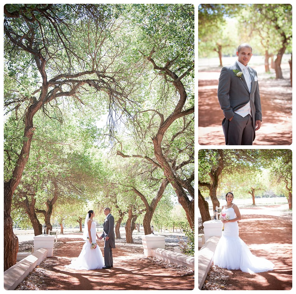 wedding-photographer-cae-town-joanne-markland-nelsons-estate-paarl-0027